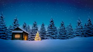 lightened christmas tree in front of wooden cabin in snow at night with pine trees in background.